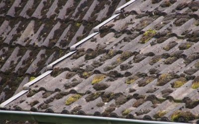 How to prevent moss growth roof