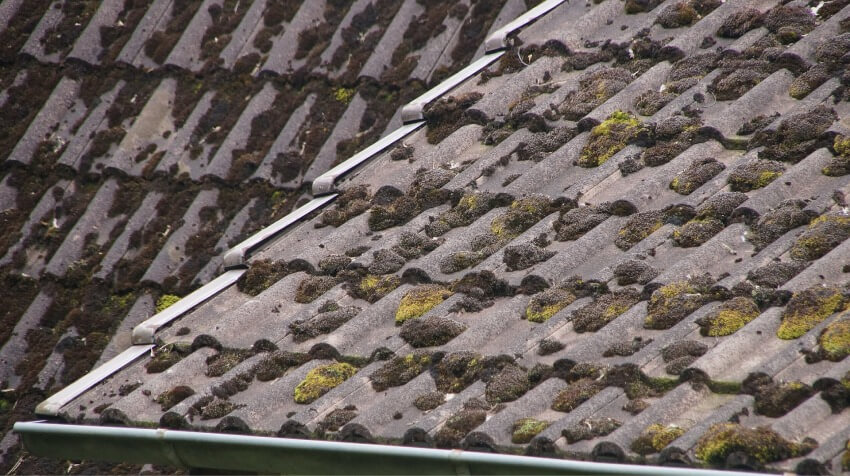 How to prevent moss growth roof 2